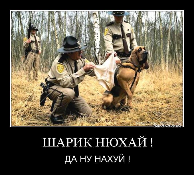 http://forum.darnet.ru/img_attach/813.jpg